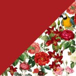 Tropical Romance + Rose